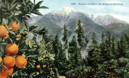Easterners were enthralled with the juxtoposition of oranges and snow.